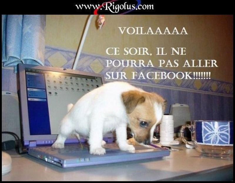 chien-qui-pisse-sur-PC.jpg