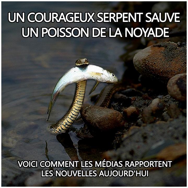 serpent-sauve-poisson.jpeg